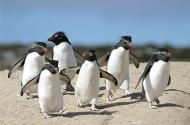 Falkland Islands where I was surrounded by thousands of penguins...awesome travel spot!