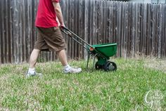 Lawn Makeover with Ace Blogger @thegatheredhome