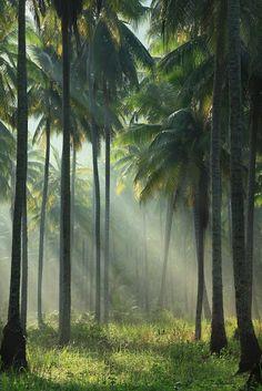 Sunlight through the palm trees. Koh Kut, Thailand.