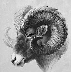 Pencil Shading, Pencil Art, Ram Tattoo, Sheep Illustration, Shiva Tattoo Design, Hunting Tattoos, Big Horn Sheep, Metal Embossing, Latest Tattoos