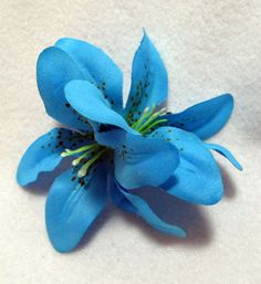 Blue Lily for the atelier