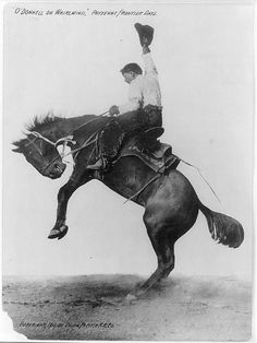 Of course, a great rider can manage to stay on just about any bronco as Mr. O'Donnell proved in his amazing ride on Whirlwind in 1911.