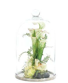 Natural Decorations, Inc. - Seracena Protea Cream Green Glass Cloche