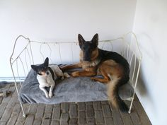 www.dehebberij.nl antiek frans ledikant in gebruik als hondenbed. Meerdere exemplaren in onze collectie.