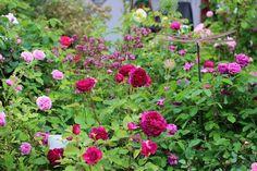 VÅRLI : Rosehagen Natural Pool, Plants, Nature