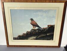 British Artist Alan M. Hunt Painting Hawk On Terracotta Roof British Wildlife, Birds Of Prey, Terracotta, Paintings, Artist, Paint, Painting Art, Artists, Painting