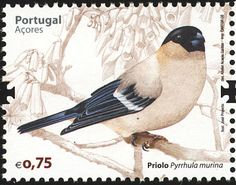 Azores Bullfinch stamps - mainly images - gallery format