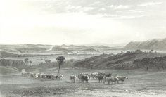 The Cow Pastures, New South Wales 1873