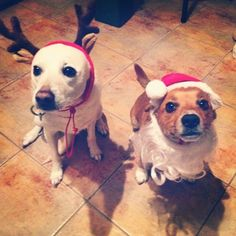 Santa and his main reindeer