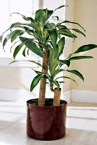 Nega sobnih biljaka - osnovni saveti za održavanje