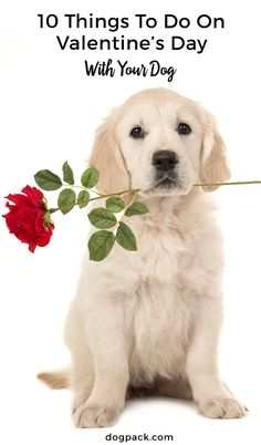 10 tips to spend Valentine's Day with your dog! Best V-Day ever? I THINK SO!