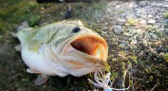 On the Chew - Jan. 11 Weekly Fishing Report