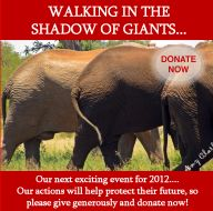 The illegal killing of elephants is increasing rapidly across the continent as the price of ivory has soared. Massacres in Central Africa's National Parks last year are now being echoed elsewhere in Kenya, including a well-publicised incident in Tsavo National Park on January 4th 2013.  #ivoryforelephants #stoppoaching #elephants for #ivory #killthetrade #animals #savetheelephants