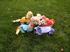 My Little Pony costumed dogs :D