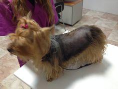 Mi perro se rasca!!! Existen diferentes tipos de patologías que pueden provocar el prurito, pero debemos saber que el picor es un síntoma (una consecuencia de algo), no una enfermedad en sí. http://blog.hvcruzcubierta.com/mi-perro-se-rasca/