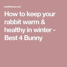 How to keep your rabbit warm & healthy in winter - Best 4 Bunny