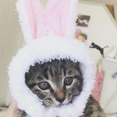 うさぎ🐰💗 #猫#ねこ#cat#愛猫#ねこすたぐらむ#にゃんすたぐらむ#ねこ部#子猫#kitten#chaton#キジトラ