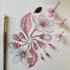 BARBWYRE. — f-l-e-u-r-d-e-l-y-s: Flowers in Progress:...
