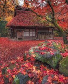 Wonderful Places, Beautiful Places, Japan Garden, Voyager Loin, Autumn Scenes, Destination Voyage, Japan Photo, Japan Picture, Nature Adventure