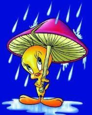 TWEETY con paraguas - Buscar con Google