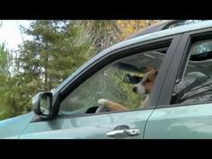 """Dogs Go Camping Subaru Ad  Being interested in the nature of a viral video, I've never tried to make """"outreach"""" before. If you could view it, like it, comment, share it, tweet it, etc., Jake and I would be very much appreciate it. I mostly refer to Japanese car and dog lovers, but this is the funny short video, so it's worthful 34 sec of your time to watch. Thanks!"""