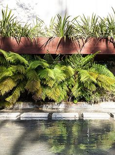 A carp pond with a mini waterfall heightens the fluidity of indoor and outdoor inherent in Neutra's design.