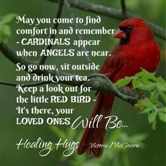 CARDINALS appear when ANGELS are near. When I see a cardinal I will hope it is one of my loved ones in heaven looking in on me. Signs From Heaven, Miss Mom, Healing Hugs, Healing Quotes, Encouragement, Cardinal Birds, Red Cardinal Meaning, First Love, My Love
