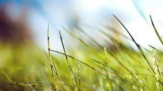 Wallpaper: http://desktoppapers.co/mz10-nature-green-grass-bokeh-summer/ via http://DesktopPapers.co : mz10-nature-green-grass-bokeh-summer