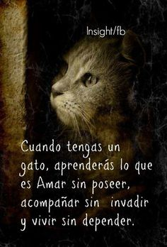 gato, libertad