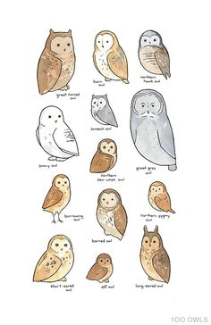 Cartoon Drawing Tips Illustrated Owl Species Chart Whimsical Art Print Art And Illustration, Watercolor Illustration, Beach Watercolor, Watercolor Print, Animal Drawings, Art Drawings, Elf Owl, Owl Species, Whimsical Owl