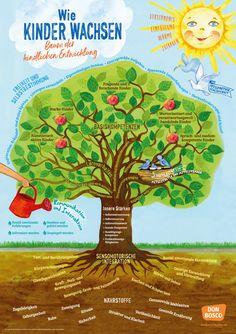 Wie Kinder wachsen - Baum der kindlichen Entwicklung | Was Kinder in der Kita schon alles wissen und können sollen! Dabei entfalten Kinder ihr Potenzial an Fertigkeiten und Kompetenzen erst, wenn ihre grundlegenden Bedürfnisse beantwortet werden: Geborgenheit und Autonomie, Gemeinschaft und Abgrenzung, Neugierde und Muße, Wertschätzung und Selbstwirksamkeit. Das DIN-A1-Plakat für die Team-, Öffentlichkeits- und Elternarbeit zeigt, welche Chancen bedürfnisorientierte Pädagogik in der Kita…