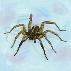 """A spider, from the book """"Under ein stein"""". The Book, Spider, Insects, Illustrations, Books, Animals, Spiders, Libros, Animales"""