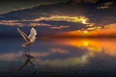 Gull taking off from the water at Sunset by RandyNyhofPhotos
