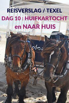 Op dag 10 van mijn verblijf op Texel maak ik vanuit De Koog  een huifkartocht door natuurgebieden De Muy en De Slufter. Daarna reis ik per bus, boot en trein weer terug naar huis. Alles over deze laatste zesde dag van mijn verblijf op Texel lees je hier. Lees je mee? #texel #nederland #huifkartocht #janplezier #dekoog #reisverslag #jtravel #jtravelblog