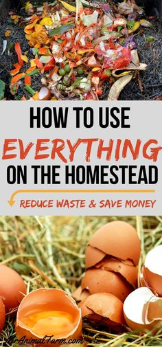 If you have a homestead you know nothing goes to waste. Here are 6 of our best tips to make sure you can use everything on your homestead.