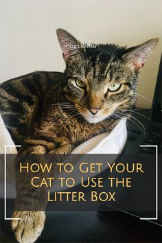 Is your cat refusing the litter box? There may be an underlying medical issue. But sometimes the solution is as simple as keeping the litter box clean! Check out this guide where I discuss different reasons your cat may be refusing the box. Cats are territorial and very clean creatures. Everything has to be just right for them! Refusing the litter box can cause health and behavioral issues for cats. It's best to get your cat happy with the litter box ASAP! Check out these litter solutions today! Best Cat Litter, Litter Box, How To Cat, Cat Hacks, Cat Sitter, Behavioral Issues, Cat Care Tips, Owning A Cat, Cat Drinking