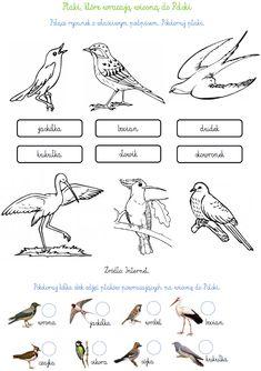 Ptaki Wędrowne:   http://www.ekokalendarz.pl/wp-content/uploads/pakiet-05-12-Światowy-Dzień-Ptaków-Wędrownych.pdf
