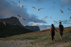 A dawn walk with the Sooty terns | Lord Howe Island