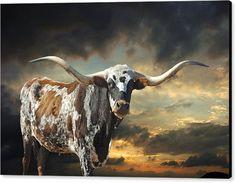 Texas Longhorn Framed Print featuring the photograph West Of El Segundo by Robert Anschutz Longhorn Cattle, Longhorn Cow, Canvas Art, Canvas Prints, Art Prints, Cow Canvas, Farm Animals, Cute Animals, Cow Painting