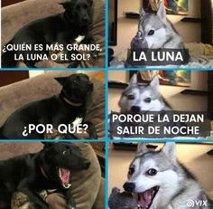 ab - Funny Husky Meme - Funny Husky Quote - (notitle) ab The post ab appeared first on Gag Dad. Funny Husky Meme, Dog Quotes Funny, Funny Animal Memes, Cat Memes, Funny Animals, Memes Humor, Mexican Funny Memes, Funny Spanish Memes, Funny Babies