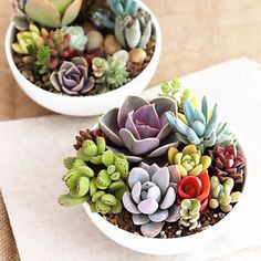 150x-Mix-Office-Potted-plants-Flowers-Succulents-Radiation-protection-Plant-Seed