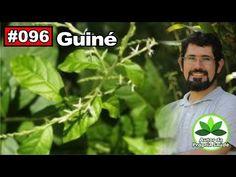 Autor da Própria Saúde – Guiné [Dor de cabeça, dor de dente, diabetes, calmante] - YouTube