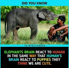 So can an elephant adopt me as A pet or something? So can an elephant adopt me as A pet or something? Wierd Facts, Wow Facts, Real Facts, Wtf Fun Facts, Funny Facts, True Interesting Facts, Interesting Facts About World, Intresting Facts, Interesting Photos