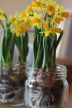 Easter decoration Glass Vase, Easter, Decoration, Flowers, Plants, Home Decor, Decor, Decoration Home, Room Decor