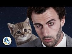 The Unexpected Benefit of Watching Cat Videos at Work | Greatist - Link: http://greatist.com/discover/unexpected-benefit-of-cat-videos