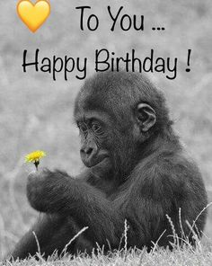 happy birthday wishes quotes for friends, brother, sister, boss, wife and happy birthday wishes quotes with images for free to share. Happy Birthday Greetings Friends, Birthday Wishes For Son, Birthday Congratulations, Birthday Blessings, Happy Birthday Funny, Happy Birthday Messages, Happy Birthday Quotes, Happy Birthday Images, Funny Birthday Cards