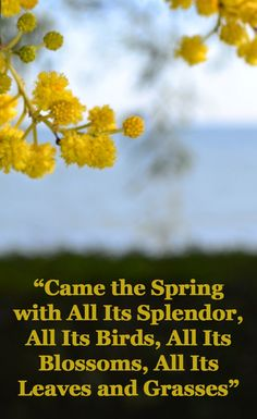 Came the Spring.....Photo by @Pascale De Groof for She Wanders She Finds  - quote