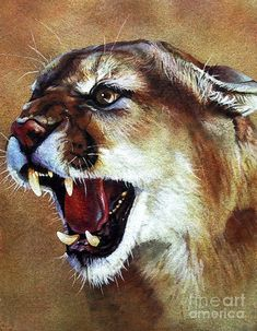 Cougar Painting  - Cougar Fine Art Print by J.W. Baker