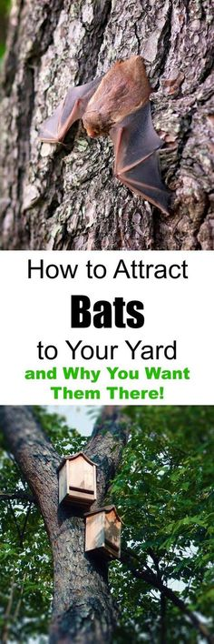 to Attract Bats to Your Yard and Why You Want Them There! How to Attract Bats to Your Yard and Why You Want Them There!How to Attract Bats to Your Yard and Why You Want Them There! Backyard Projects, Outdoor Projects, Garden Projects, Permaculture, How To Attract Bats, Bat House Plans, Bat Box, Animal House, Lawn And Garden