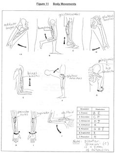 synovial joints   Joints (Articulations). Fibrous Joints ...
